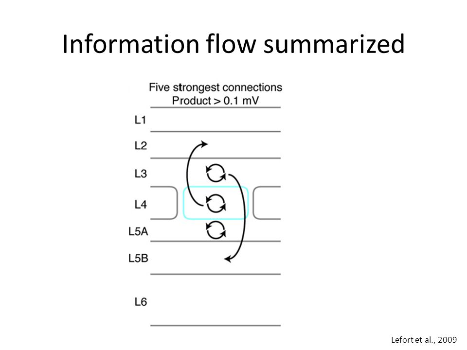 Information flow summarized Lefort et al., 2009