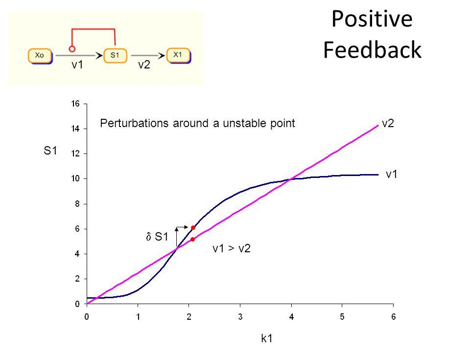 Positive Feedback S1 k1 v2 v1 v2 v1 > v2 Perturbations around a unstable point S1