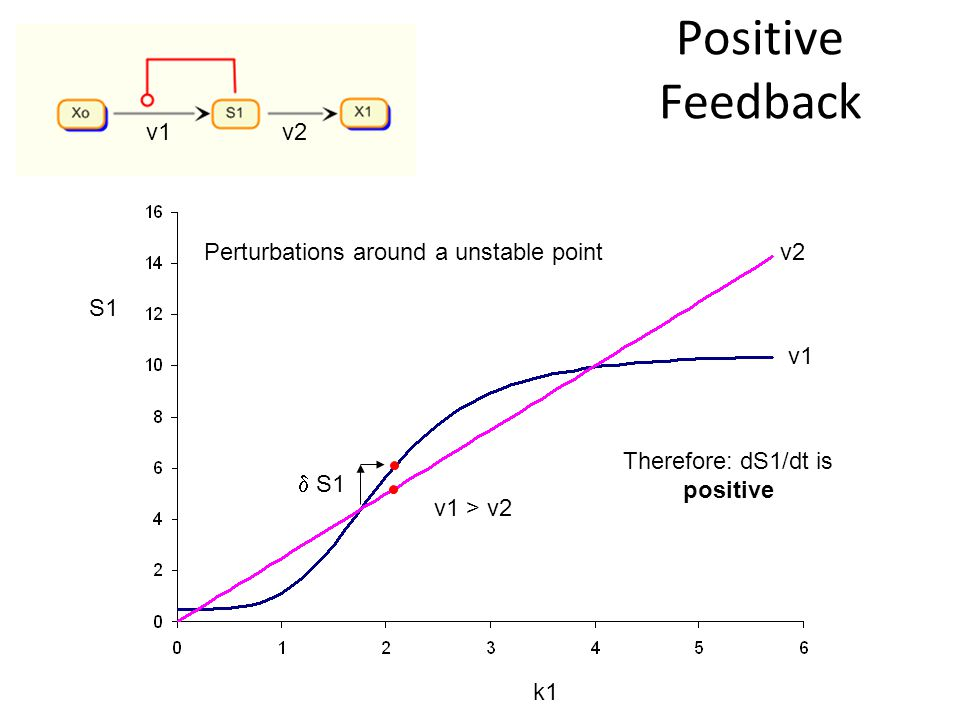 Positive Feedback S1 k1 v2 v1 v2 Therefore: dS1/dt is positive Perturbations around a unstable point v1 > v2 S1