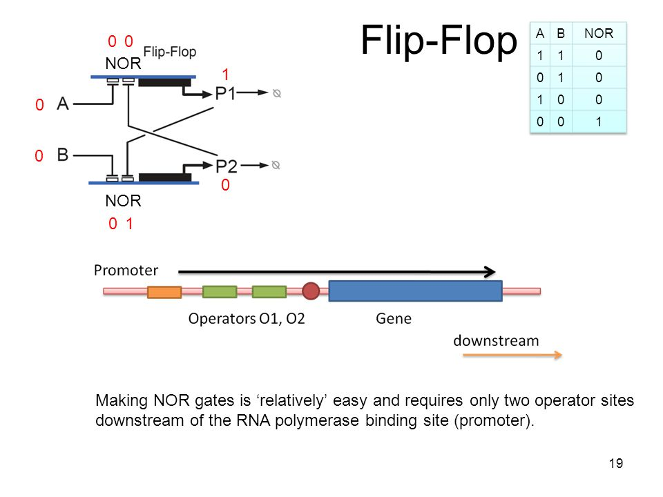 Flip-Flop 0 0 1 0 0 NOR 1 00 Making NOR gates is relatively easy and requires only two operator sites downstream of the RNA polymerase binding site (promoter).