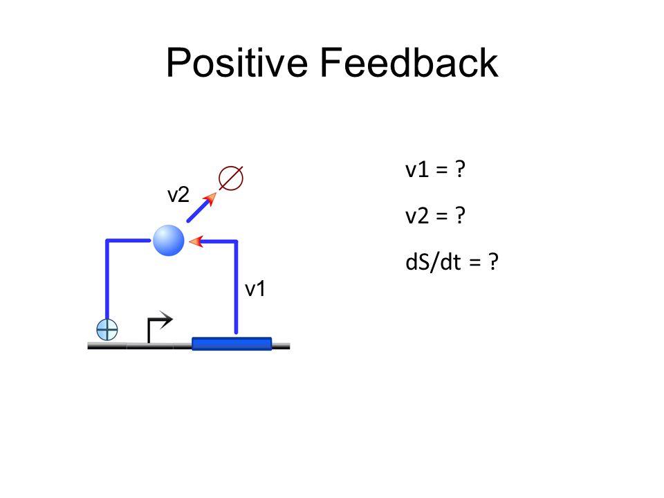 Positive Feedback v1 = ? v2 = ? dS/dt = ? v1 v2