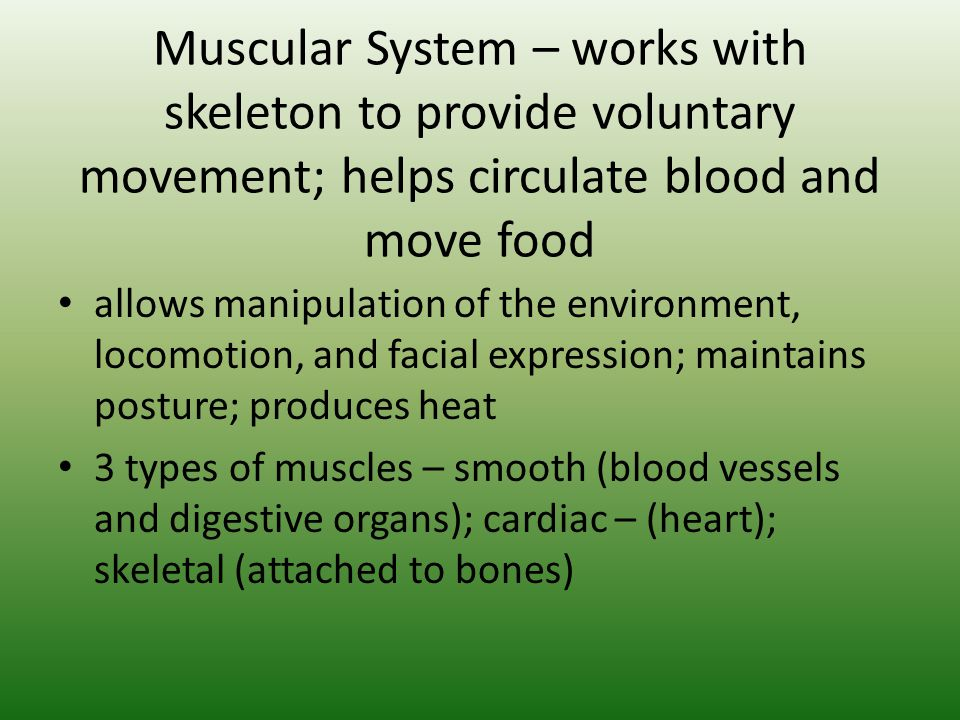 Muscular System – works with skeleton to provide voluntary movement; helps circulate blood and move food allows manipulation of the environment, locom