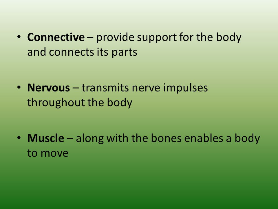 Connective – provide support for the body and connects its parts Nervous – transmits nerve impulses throughout the body Muscle – along with the bones
