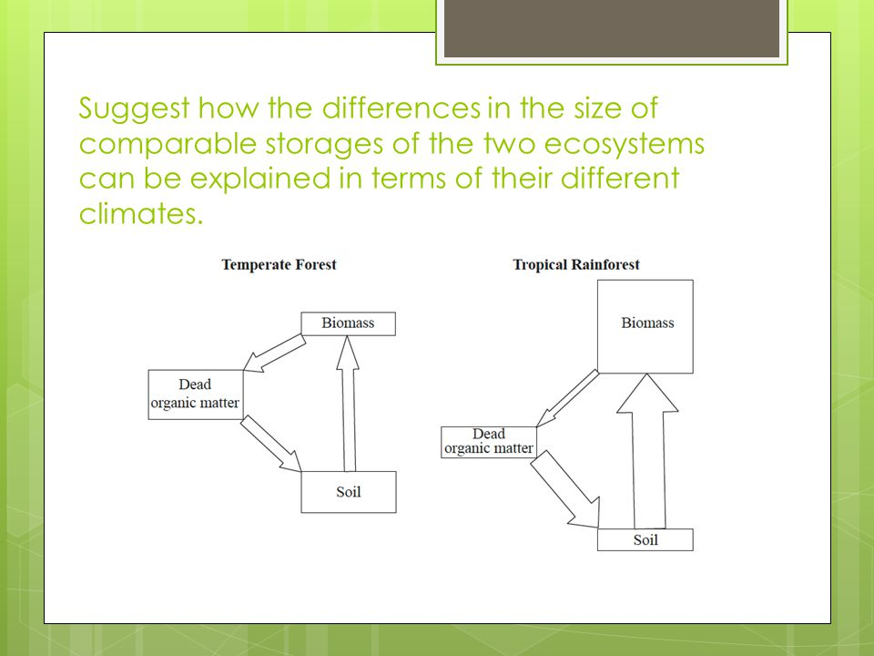 Suggest how the differences in the size of comparable storages of the two ecosystems can be explained in terms of their different climates.