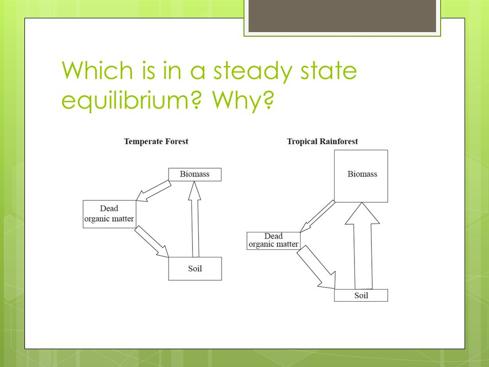 Which is in a steady state equilibrium? Why?