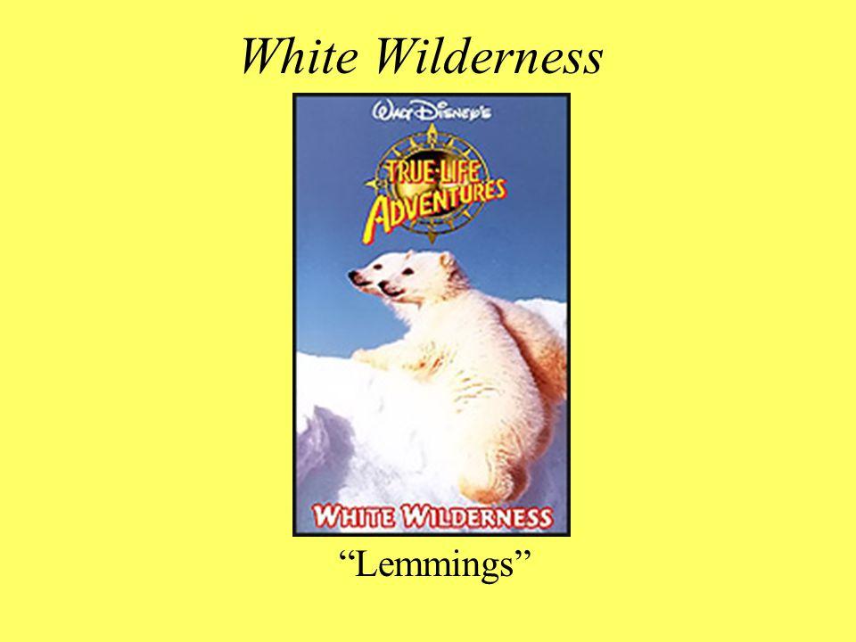 White Wilderness Lemmings