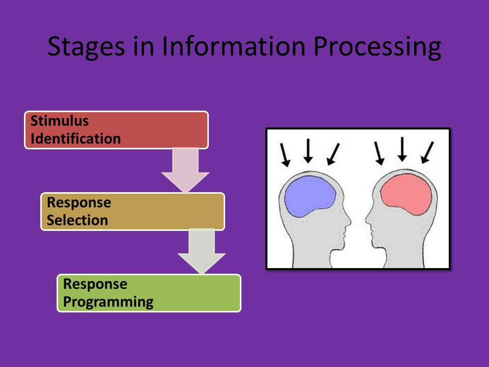 Stages in Information Processing Stimulus Identification Response Selection Response Programming