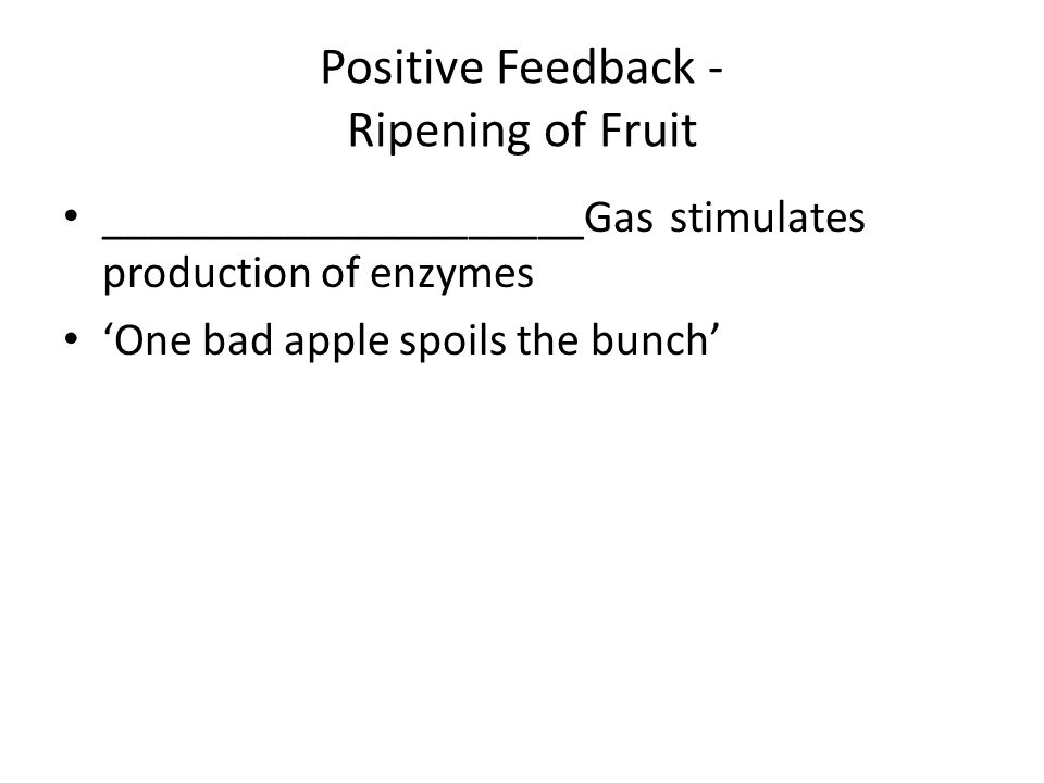 Positive Feedback - Ripening of Fruit _____________________Gas stimulates production of enzymes One bad apple spoils the bunch