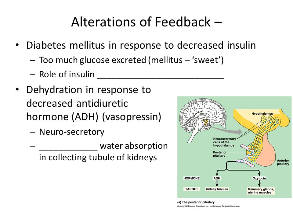 Alterations of Feedback – Diabetes mellitus in response to decreased insulin – Too much glucose excreted (mellitus – sweet) – Role of insulin ________
