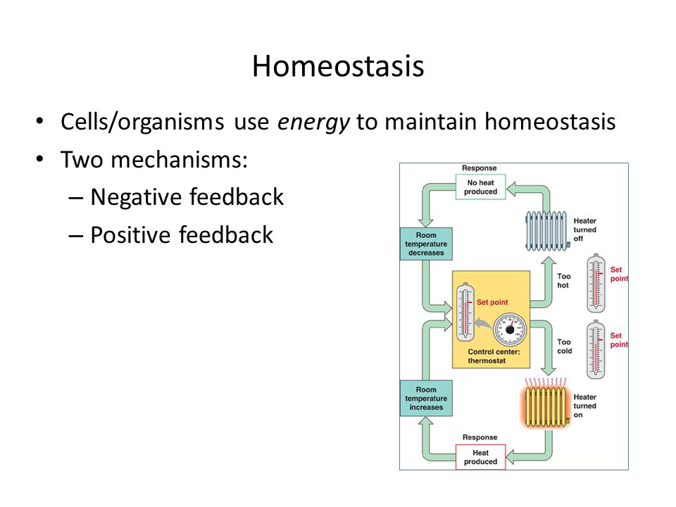 Homeostasis Cells/organisms use energy to maintain homeostasis Two mechanisms: – Negative feedback – Positive feedback