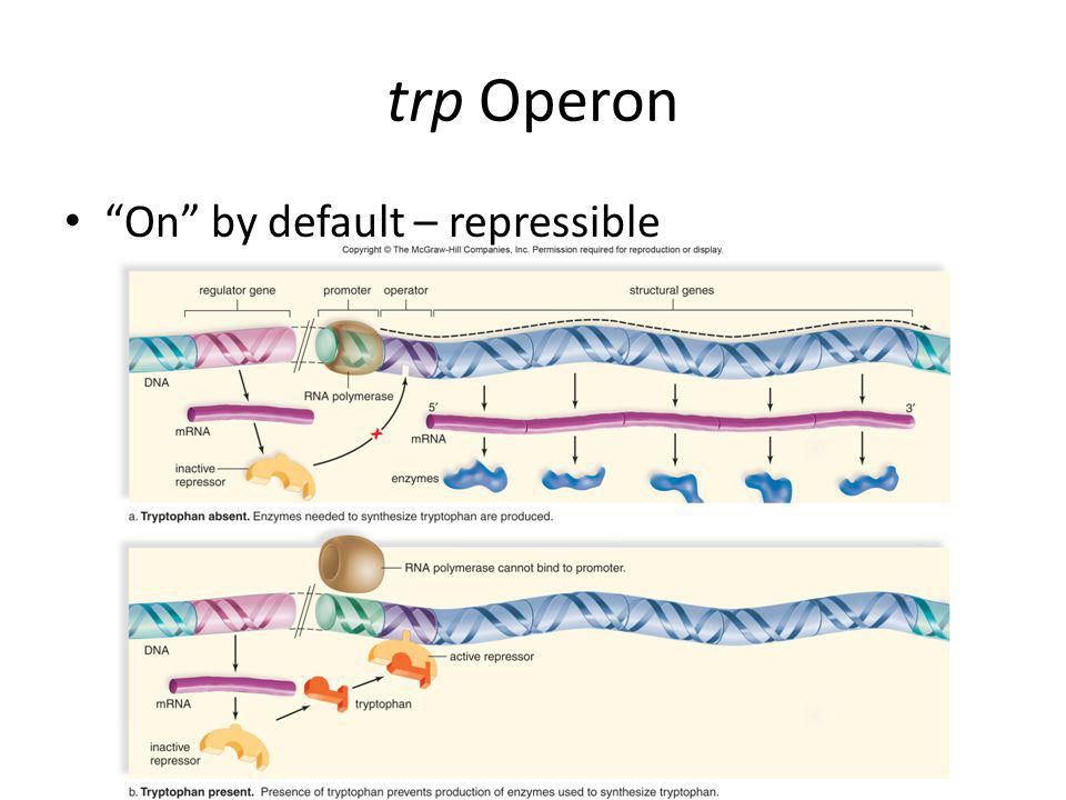 lac Operon Off by default - inducible