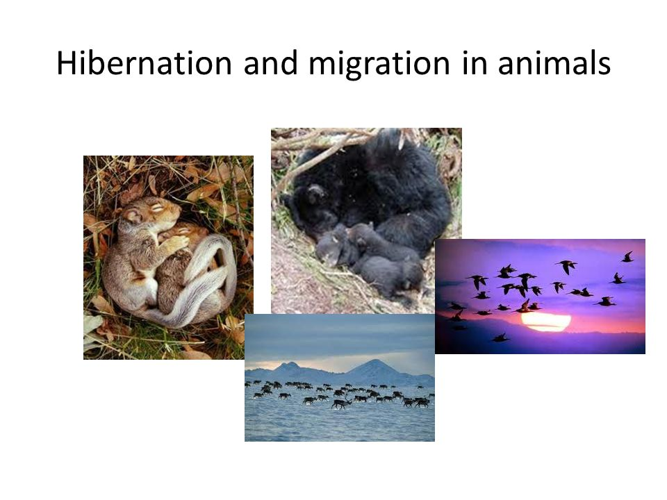 Hibernation and migration in animals