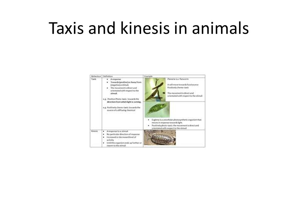 Taxis and kinesis in animals