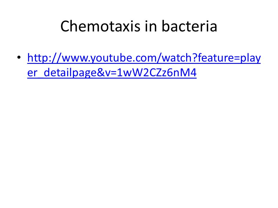 Chemotaxis in bacteria http://www.youtube.com/watch feature=play er_detailpage&v=1wW2CZz6nM4 http://www.youtube.com/watch feature=play er_detailpage&v=1wW2CZz6nM4