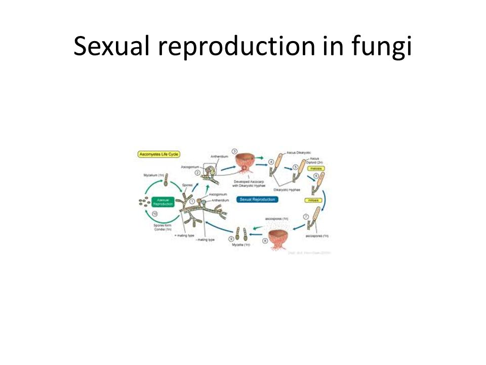 Sexual reproduction in fungi