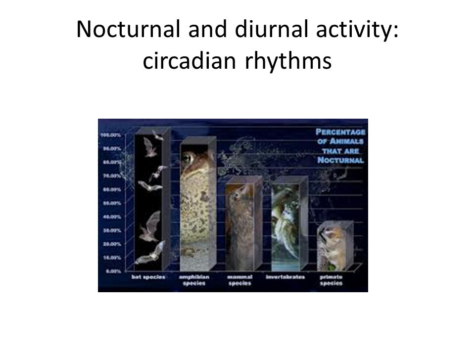 Nocturnal and diurnal activity: circadian rhythms