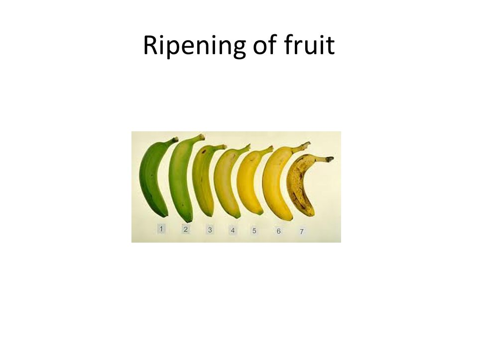 Ripening of fruit