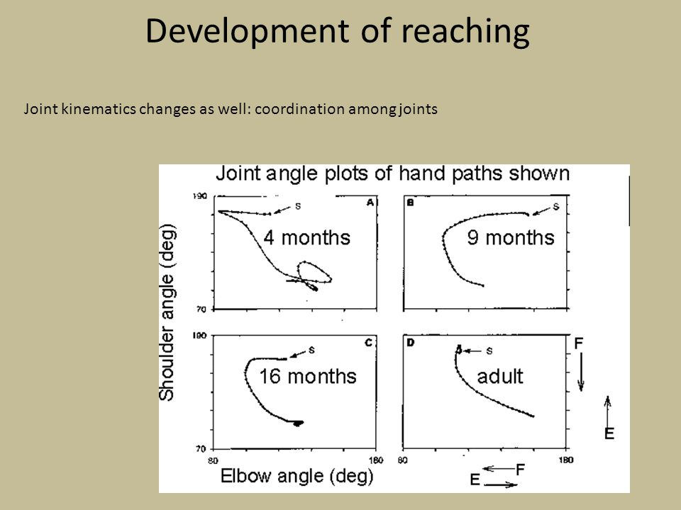 Development of reaching Joint kinematics changes as well: coordination among joints