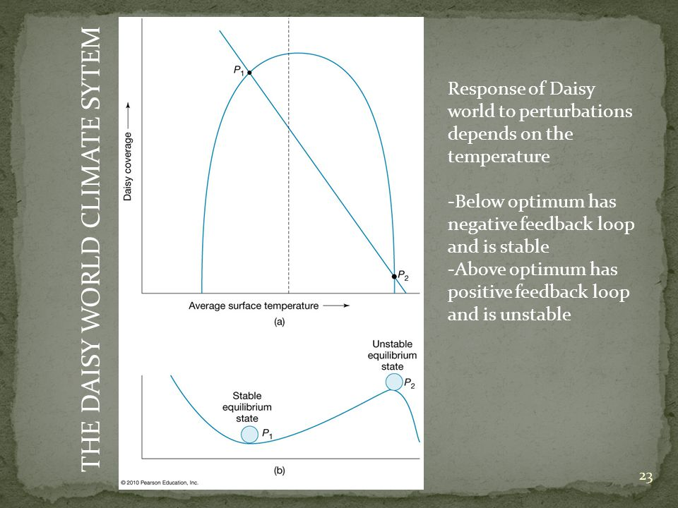 THE DAISY WORLD CLIMATE SYTEM Response of Daisy world to perturbations depends on the temperature -Below optimum has negative feedback loop and is stable -Above optimum has positive feedback loop and is unstable 23