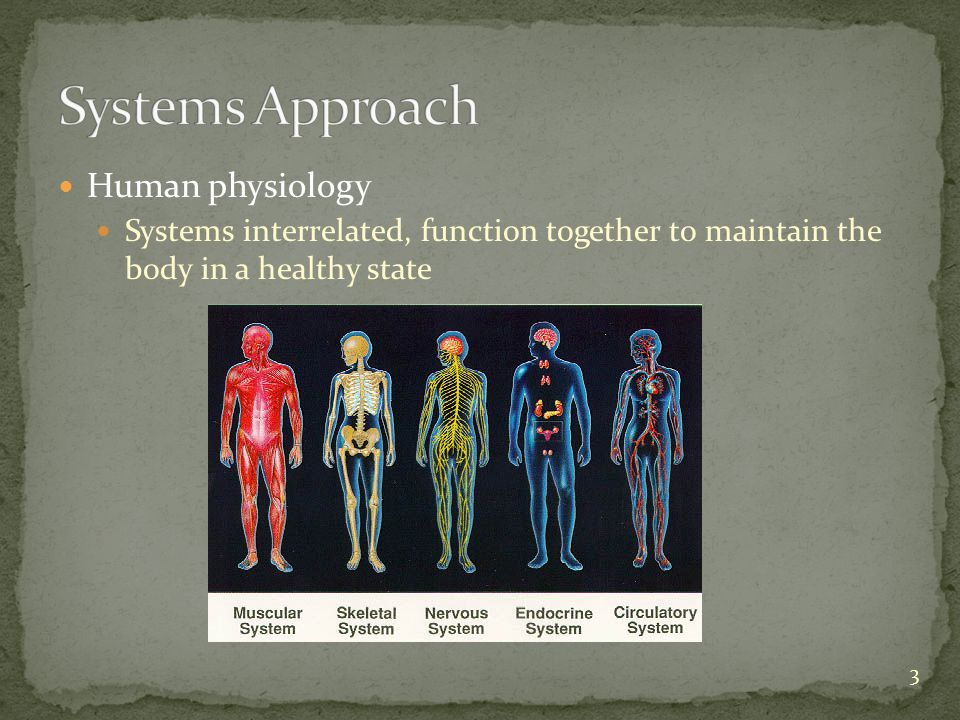 Human physiology Systems interrelated, function together to maintain the body in a healthy state 3