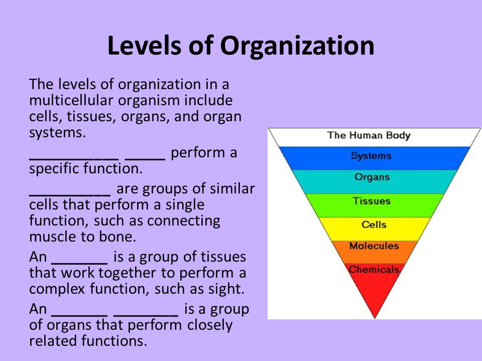 Levels of Organization The levels of organization in a multicellular organism include cells, tissues, organs, and organ systems. ___________ _____ per