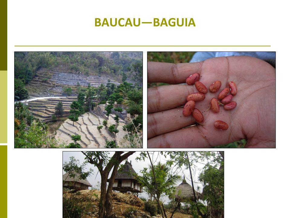 BAUCAUBAGUIA