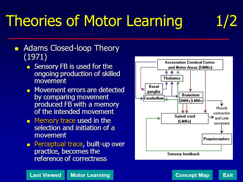 Theories of Motor Learning 1/2 Adams Closed-loop Theory (1971) Adams Closed-loop Theory (1971) Sensory FB is used for the ongoing production of skille