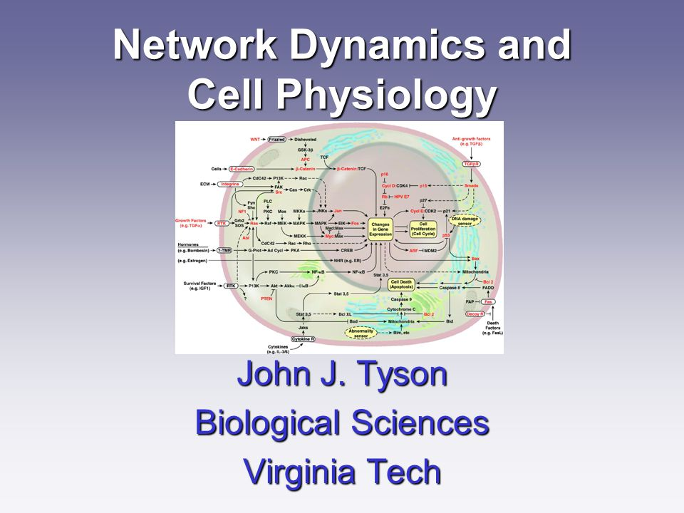Network Dynamics and Cell Physiology John J. Tyson Biological Sciences Virginia Tech