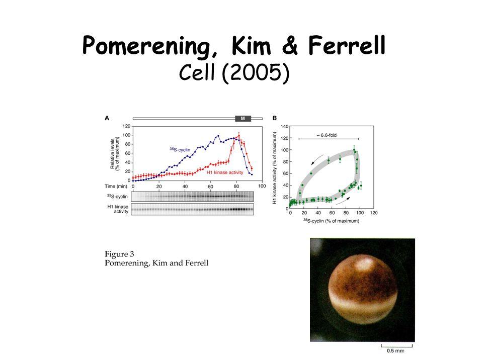 Pomerening, Kim & Ferrell Cell (2005)