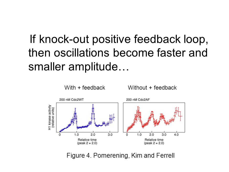 If knock-out positive feedback loop, then oscillations become faster and smaller amplitude… Figure 4.