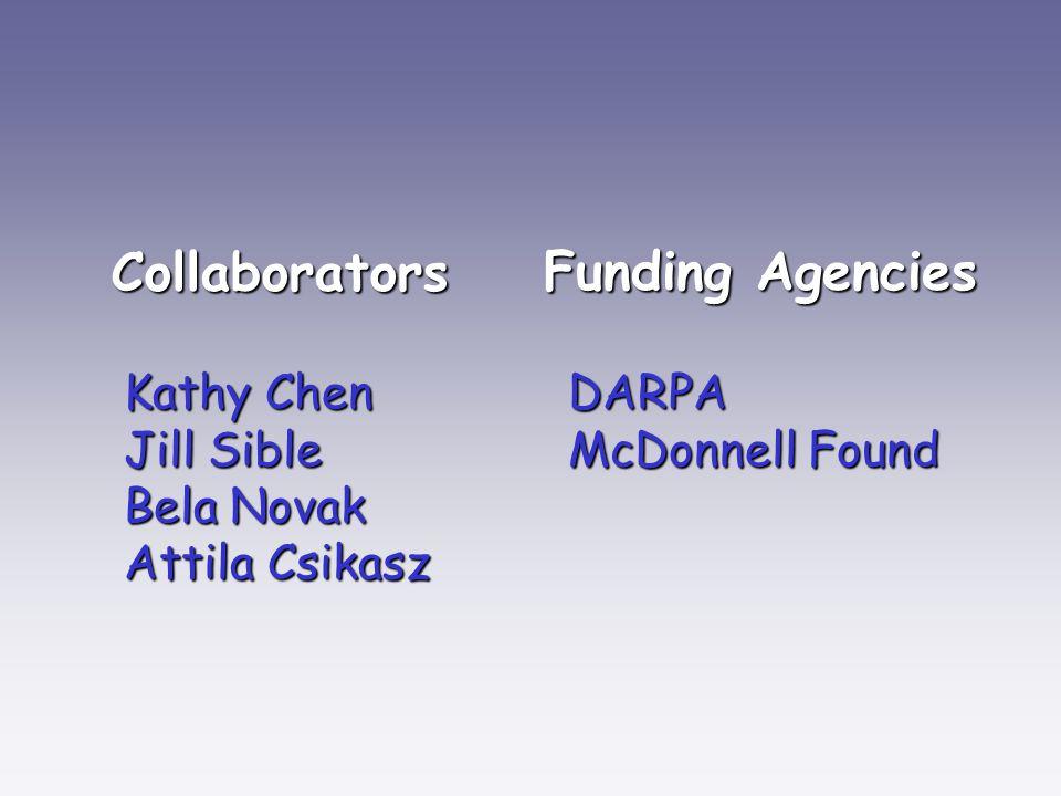 Collaborators Kathy Chen Jill Sible Bela Novak Attila Csikasz Funding Agencies DARPA McDonnell Found