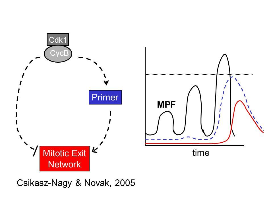 Cdk1 CycB Primer Mitotic Exit Network time Csikasz-Nagy & Novak, 2005 MPF
