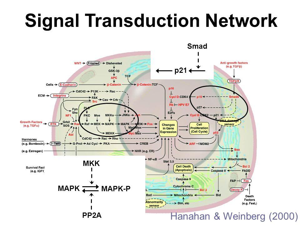 Hanahan & Weinberg (2000) Signal Transduction Network p21 Smad MAPK MKK MAPK-P PP2A