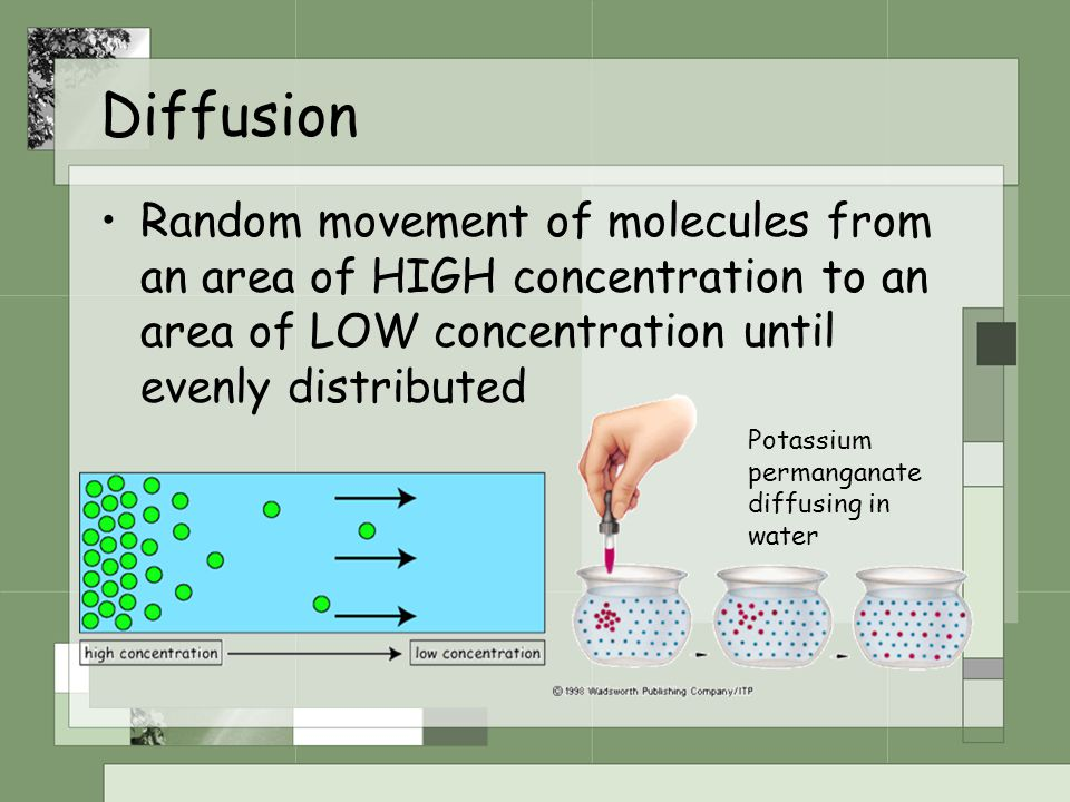Diffusion Random movement of molecules from an area of HIGH concentration to an area of LOW concentration until evenly distributed Potassium permangan