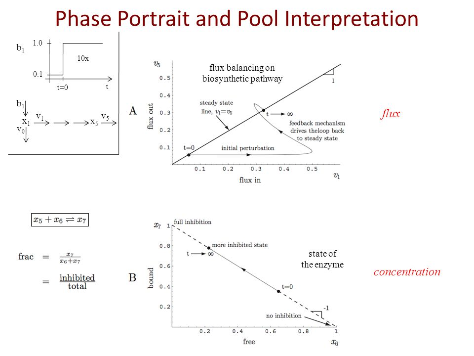 Phase Portrait and Pool Interpretation x1x1 x5x5 b1b1 v0v0 v1v1 v5v5 10x 1.0 0.1 t=0 t b1b1 flux balancing on biosynthetic pathway flux state of the e