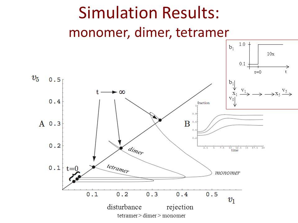 Simulation Results: monomer, dimer, tetramer tetramer dimer monomer x1x1 x5x5 b1b1 v0v0 v1v1 v5v5 10x 1.0 0.1 t=0 t b1b1 disturbancerejection tetramer