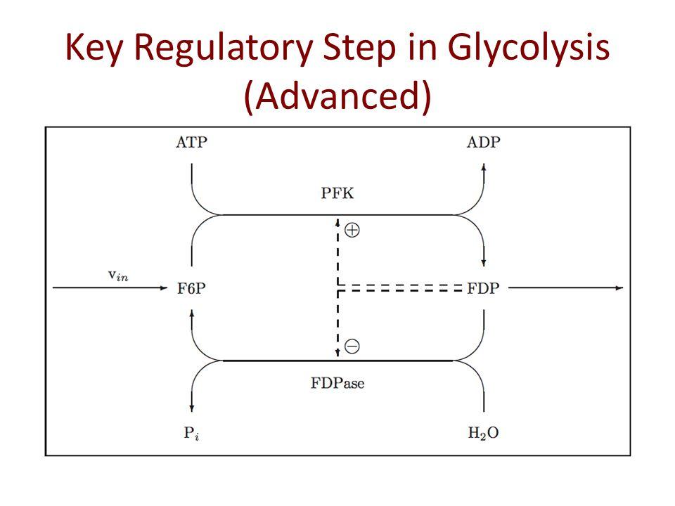 Key Regulatory Step in Glycolysis (Advanced)