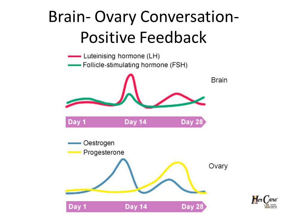 Brain- Ovary Conversation- Positive Feedback Brain Ovary