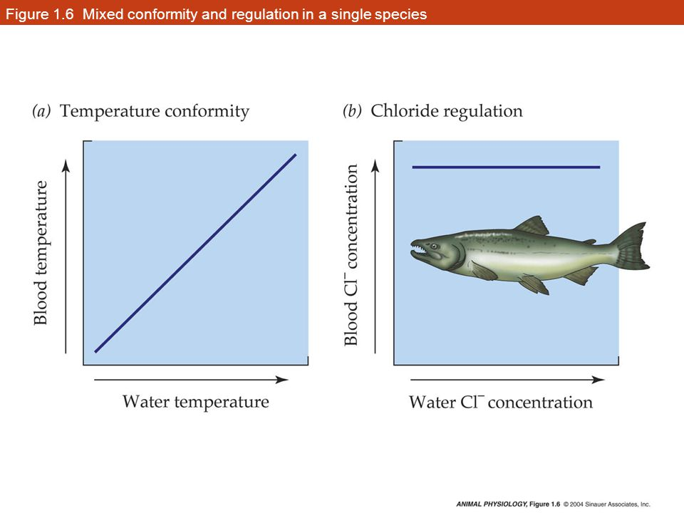 Advantages and disadvantages of conformity and regulation Regulation- disadvantage– costs energy Regulation- advantage– permits cells to function independently of outside condition Conformity- disadvantage- cells within the body are subject to change when outside condition changes Conformity- advantage– avoids energy costs of maintaining organization