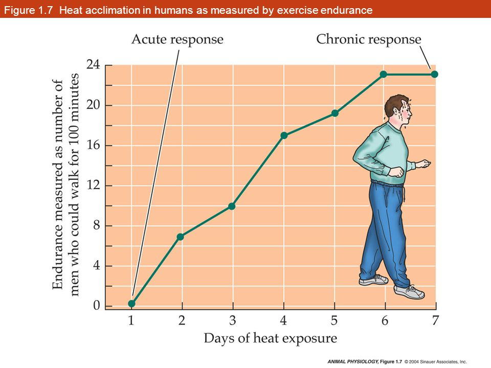 Figure 1.7 Heat acclimation in humans as measured by exercise endurance