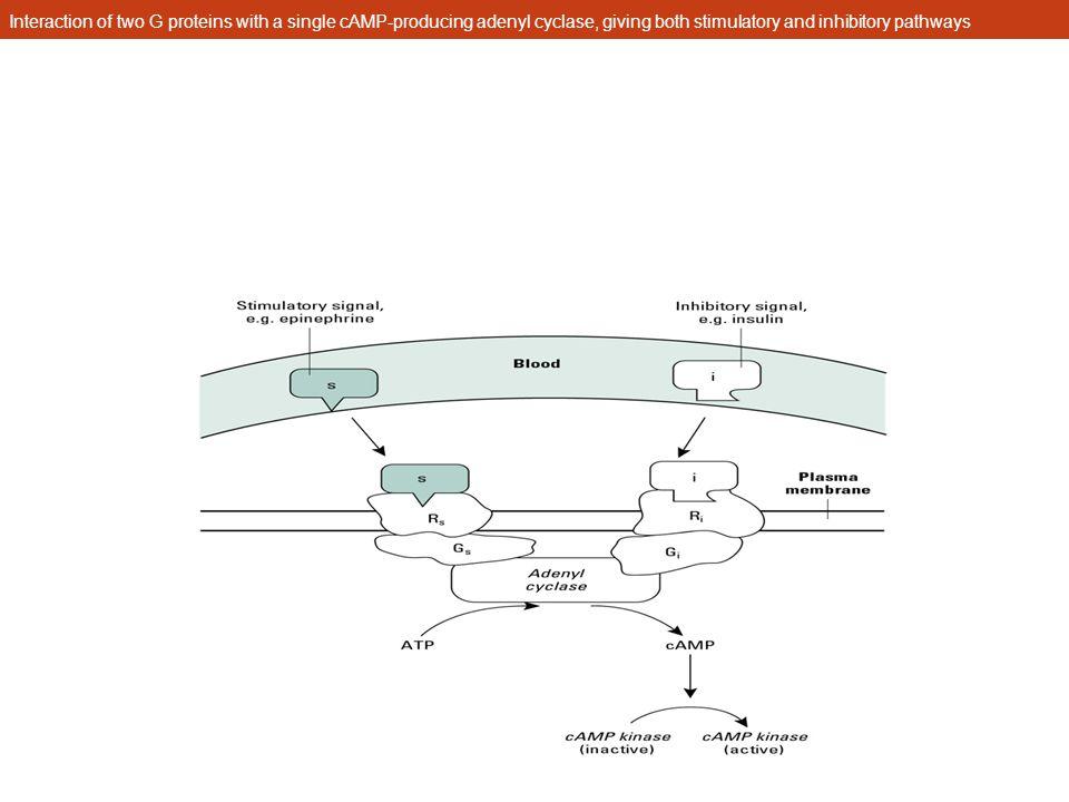 Extracellular control signals Growth factor Hormones Neurotransmitters