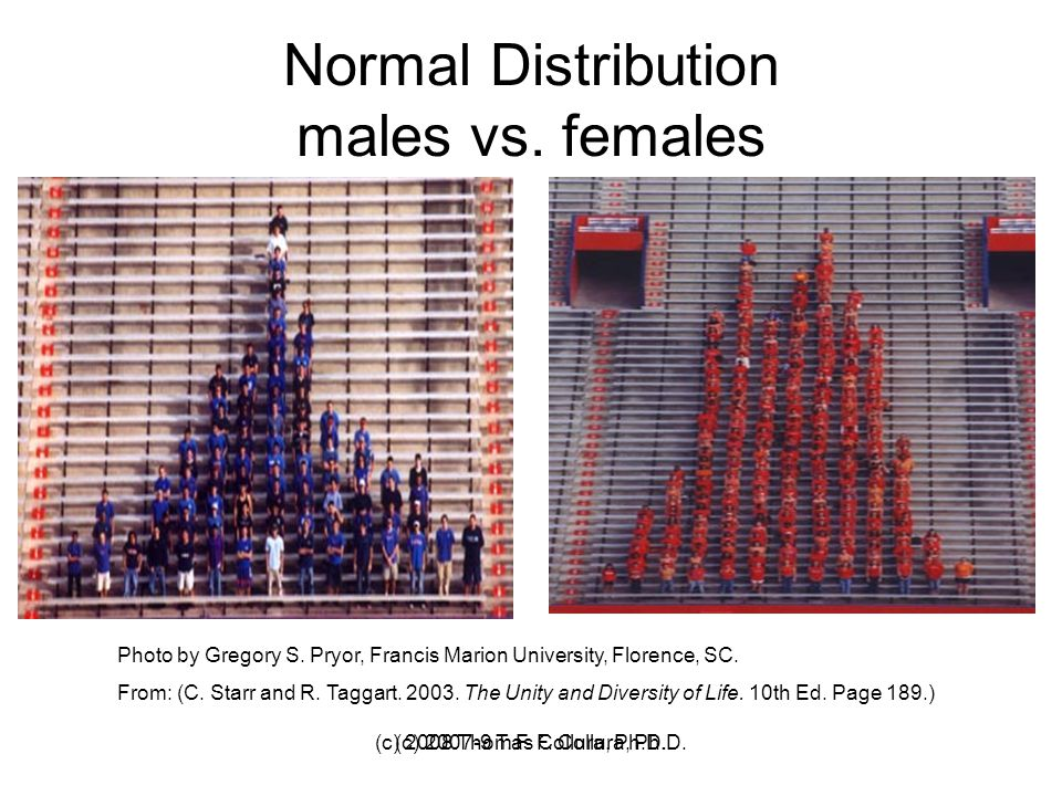 (c) 2007-9 T. F. Collura, Ph.D.(c) 2008 Thomas F. Collura, Ph.D. Normal Distribution males vs. females Photo by Gregory S. Pryor, Francis Marion Unive