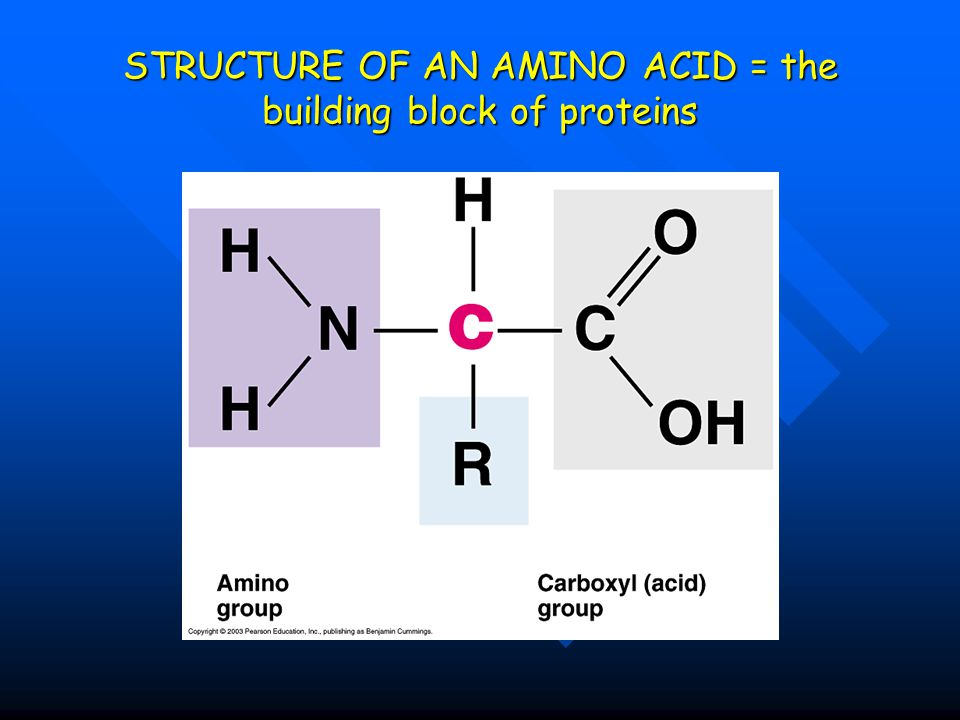 STRUCTURE OF AN AMINO ACID = the building block of proteins