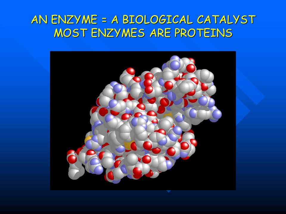 AN ENZYME = A BIOLOGICAL CATALYST MOST ENZYMES ARE PROTEINS