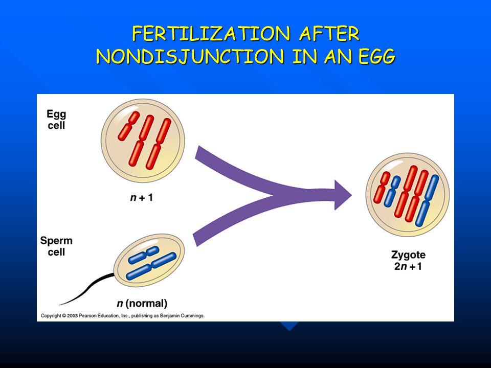 FERTILIZATION AFTER NONDISJUNCTION IN AN EGG