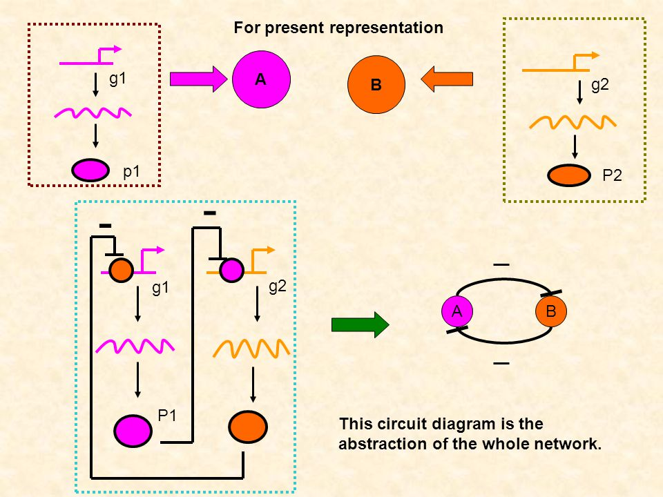 g1 p1 A g2 P2 B - g1 g2 P1 - AB For present representation This circuit diagram is the abstraction of the whole network.