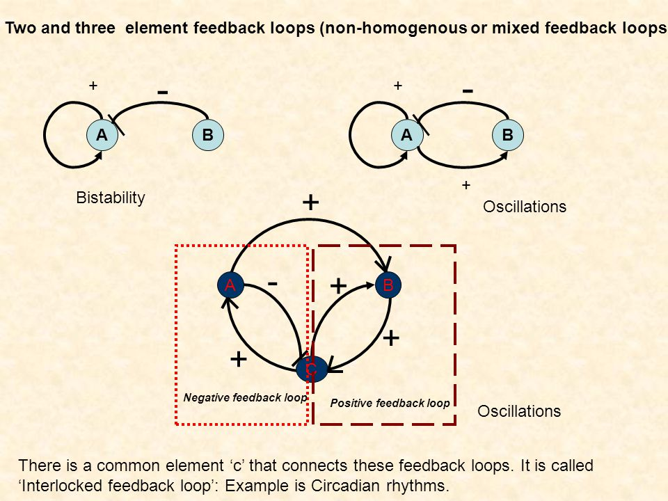 Two and three element feedback loops (non-homogenous or mixed feedback loops) A + B - A + B - + B C A + + + + - Negative feedback loop Positive feedback loop There is a common element c that connects these feedback loops.