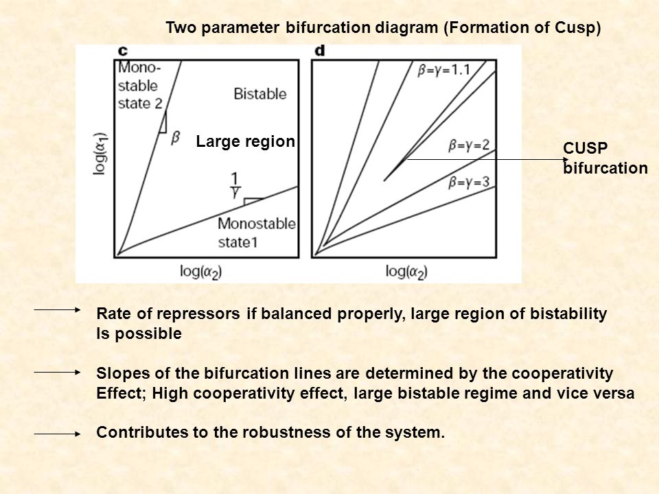 Rate of repressors if balanced properly, large region of bistability Is possible Slopes of the bifurcation lines are determined by the cooperativity Effect; High cooperativity effect, large bistable regime and vice versa Contributes to the robustness of the system.