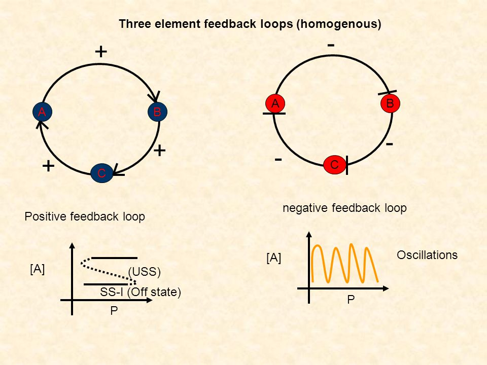 Three element feedback loops (homogenous) B C A + + + B C A - - - Positive feedback loop negative feedback loop [A] P Oscillations [A] P SS-I (Off sta