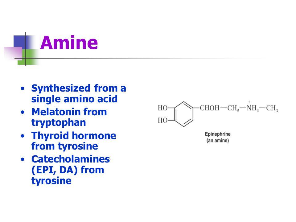 Amine Synthesized from a single amino acid Melatonin from tryptophan Thyroid hormone from tyrosine Catecholamines (EPI, DA) from tyrosine